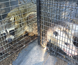 Commercial Wildlife Removal | Wildlife Removal Experts, LLC